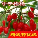 福星草中宁枸杞500克